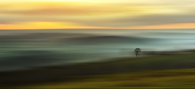 Lonesome Tree on the Horizon