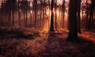 Winter Woodland Dawn