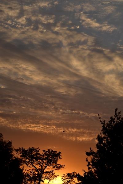 An African Sun Set