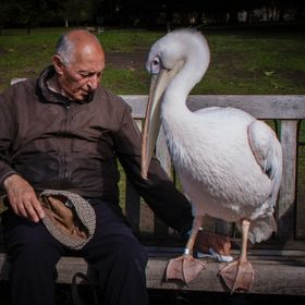 I met these two unusual friends in St. James park in London. I was fascinated by the deep connection between them, who meet up every day and enjo...