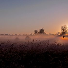 This is an early Autumn sunrise at a wetland area called Pickerington Ponds, which is just outside of Columbus, Ohio. It it a great location for ...