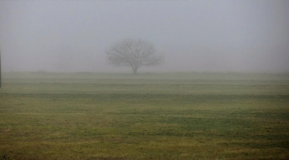 Green Pasture Fog