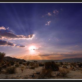 A beautiful Mojave desert sunset, shines over Joshua Tree, California.