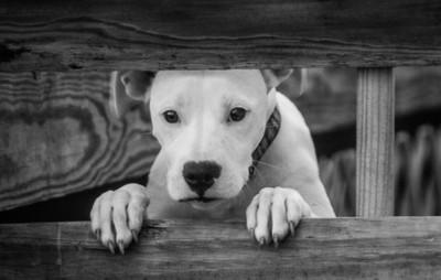dog next door