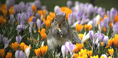300 Rodents Photo Contest Winners!