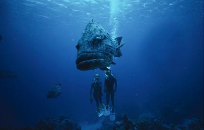 Scuba Diving Great BarierReef