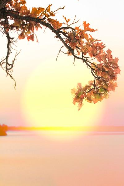 Fall Colors At Lake Bemidji