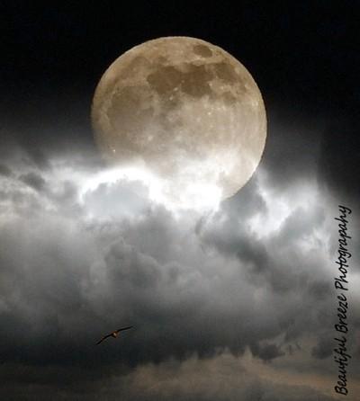 The Moon & The Sea Gull