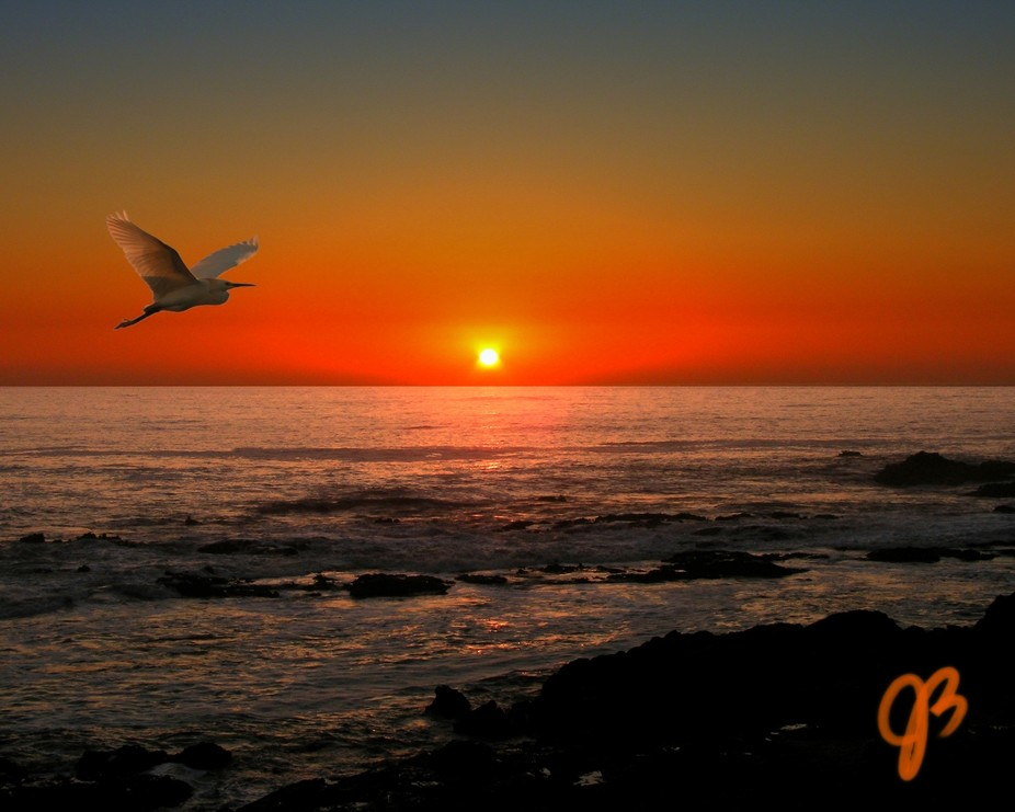 cali coast and bird