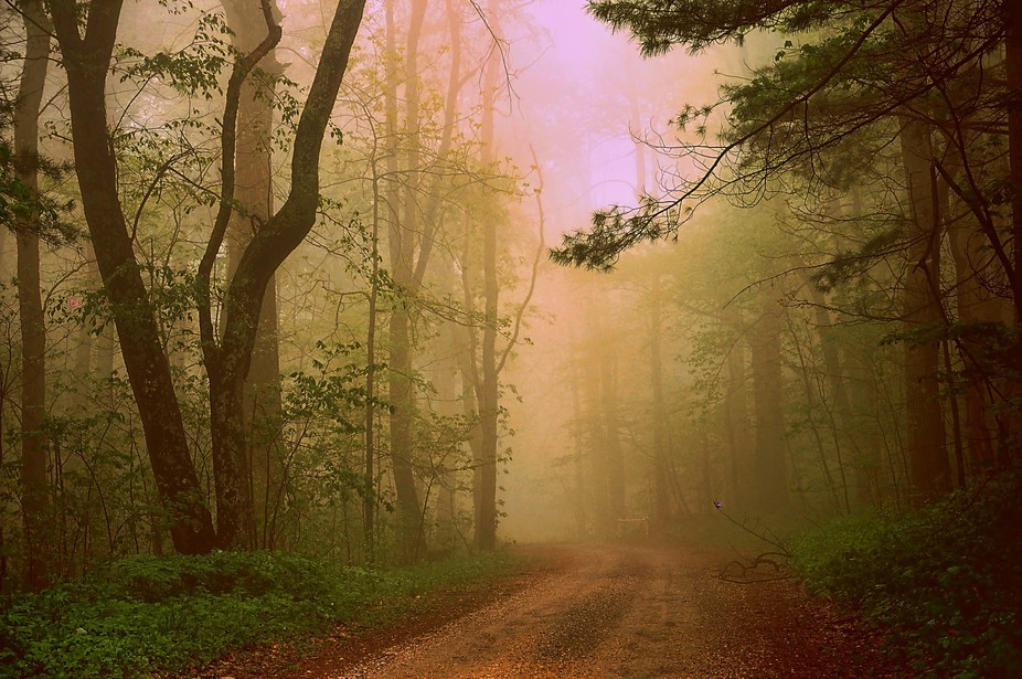A foggy morning in Blue Ridge Parkway, Virginia