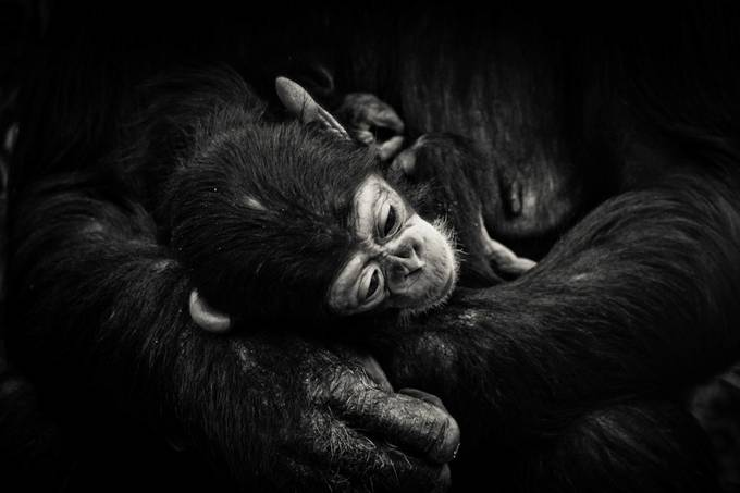 Hold by adelecarne - Monkeys And Apes Photo Contest