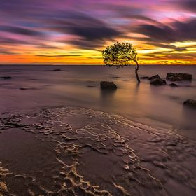 I love this little tree and I keep going back to this sport to try and get the perfect shot.  If the wind, tide and sunrise are all right there i...
