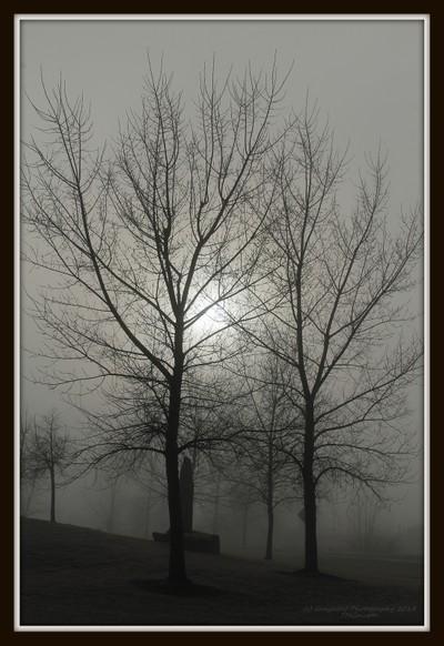 Eerie Morning Fog