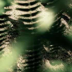 The interlacing shadow play of the fern leafs.