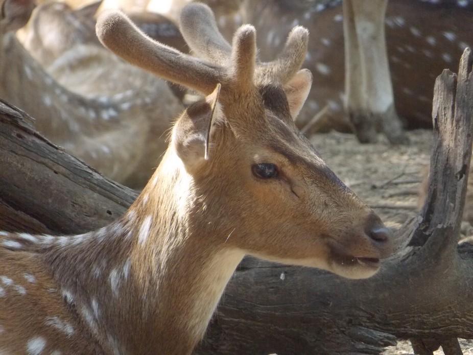 Mood of the deer!!