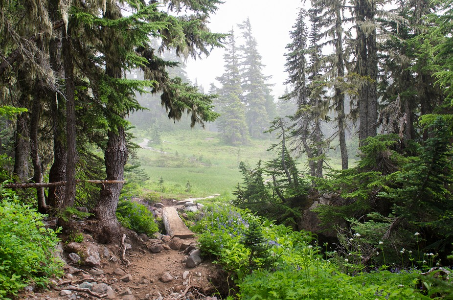 Spray Park hike in Mt. Rainer National Park WA