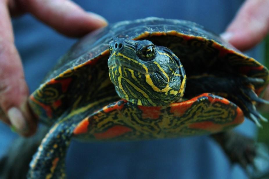 Looking at Me? ~ Turtle