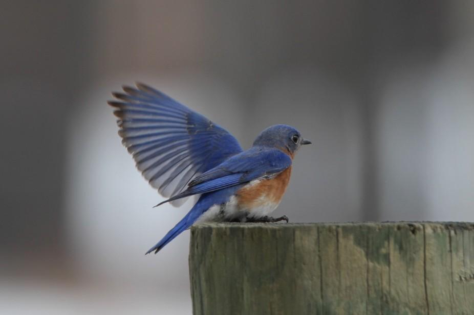 I\'m loving the bluebirds!!!