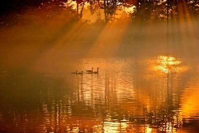 the goose blur