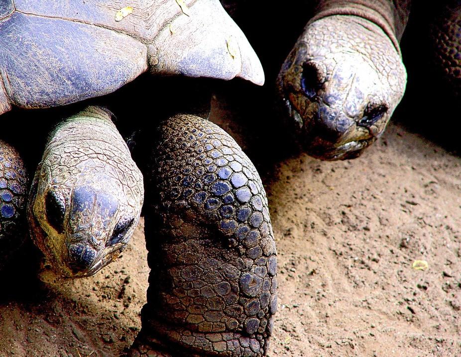 Tortoise Dialogue