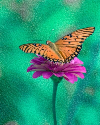 Heavenly Nectar