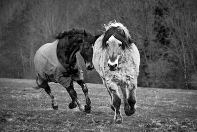 lucid-images-horses-running-monochrome