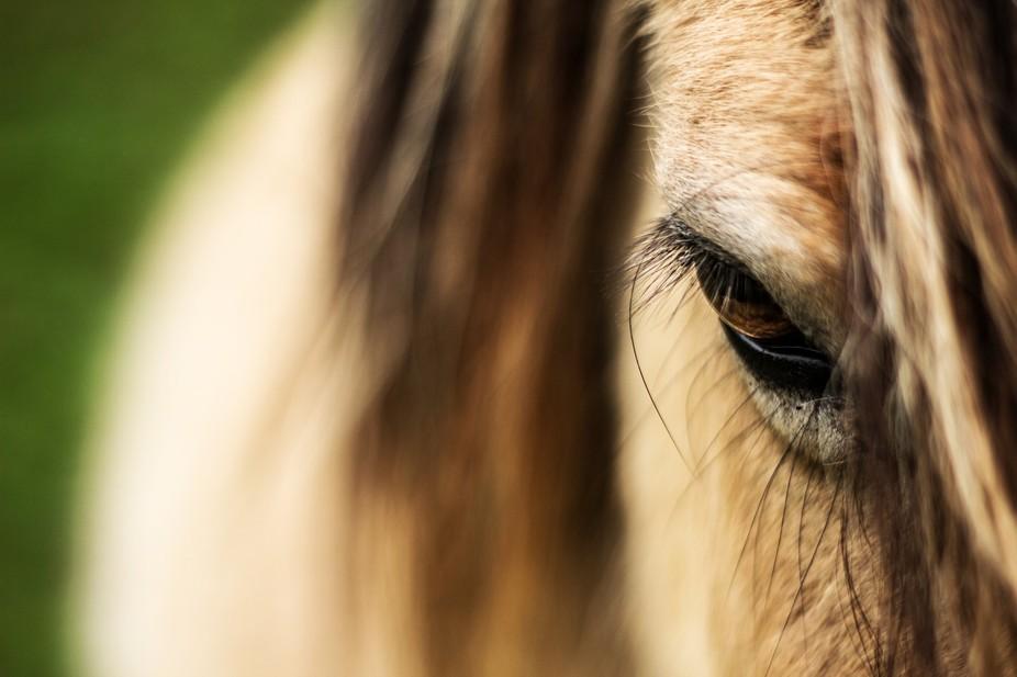 horses eye, a close up