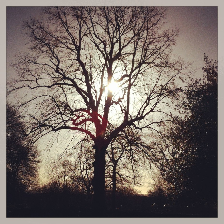 Nice capture of the sun behind the grand tree