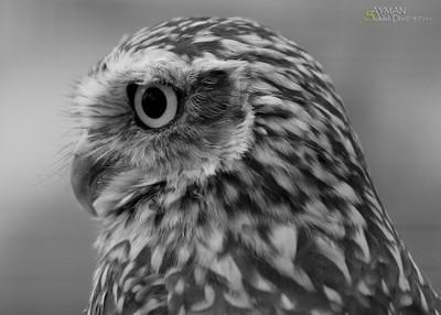 owl beauty