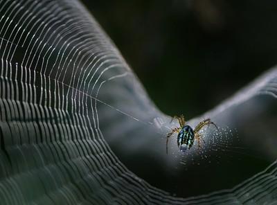 Neon Spider