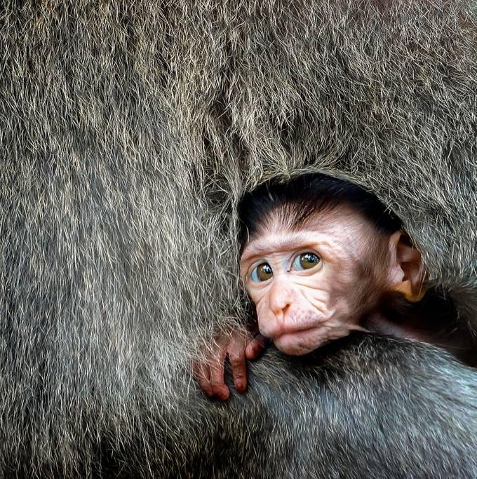 SNUG by ScottELB - Baby Animals Photo Contest