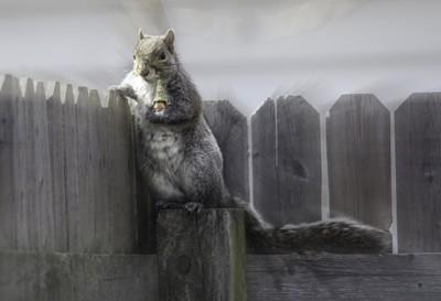 dos equis squirrel