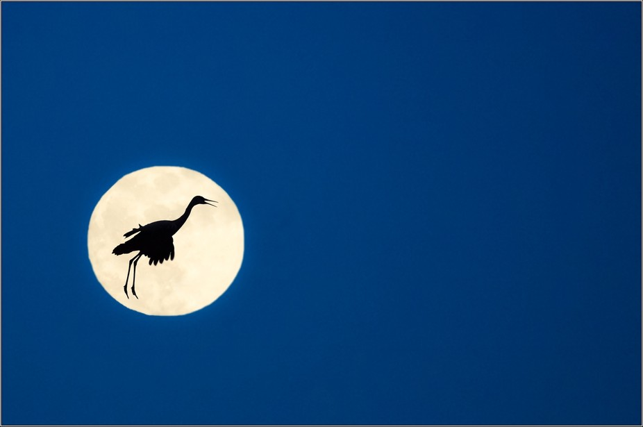 taken during a full moon at Bosque del Apache - flying crane super-imposed in photoshop.