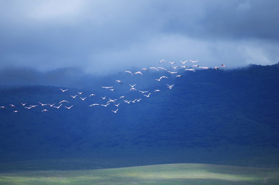 Flamingos in the clouds