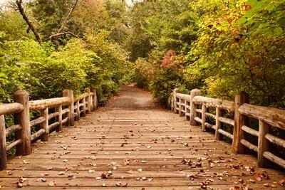 A Bridge Into Autumn