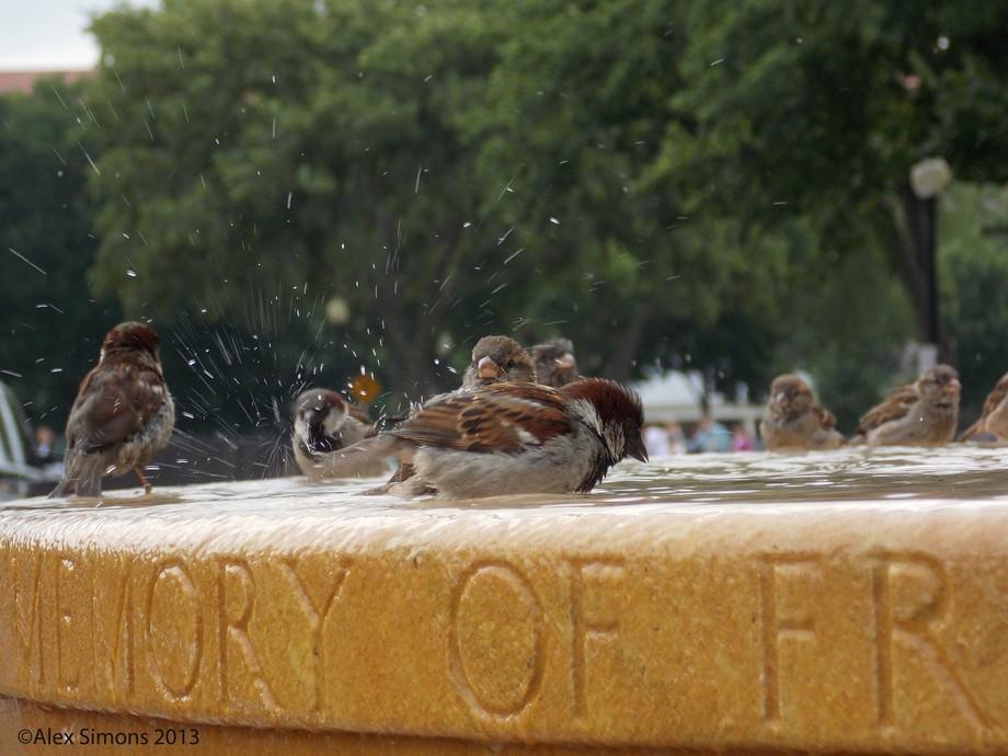 Birdbath Copyrighted