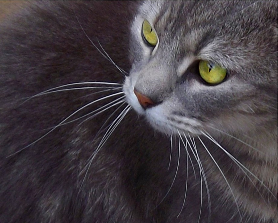 My Sister\'s miracle cat who was shot by one of the neighbors and survived.