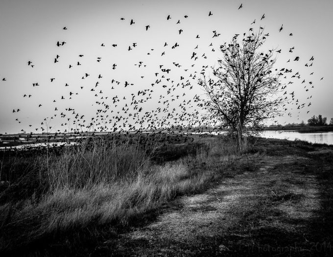 The Birds by htorres209 - Awesomeness In Black And White Photo Contest
