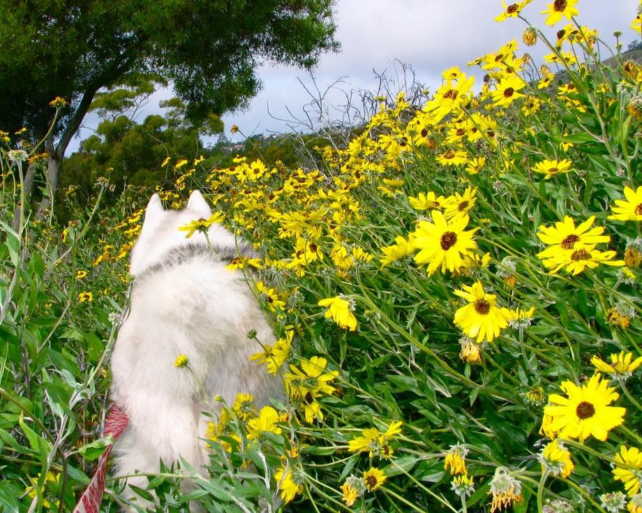 Meadow Safari