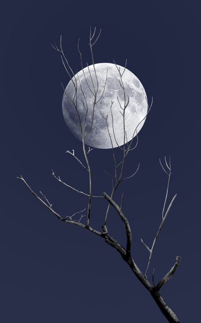 Dead Tree with Moon 2