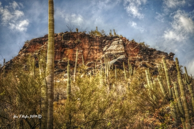 Sabino Canyon, Tucson AZ