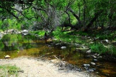 Sabino Canyon Stream