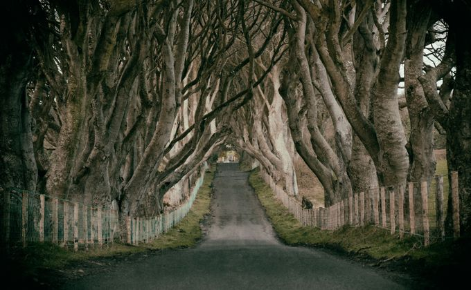 The Dark Hedges by VladM - Best Shot Photo Contest