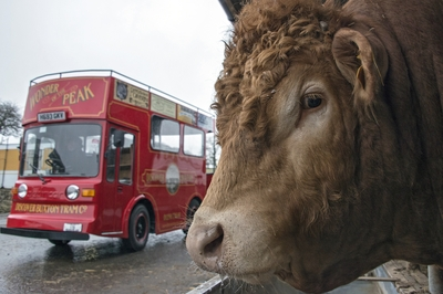 The tram and the bull