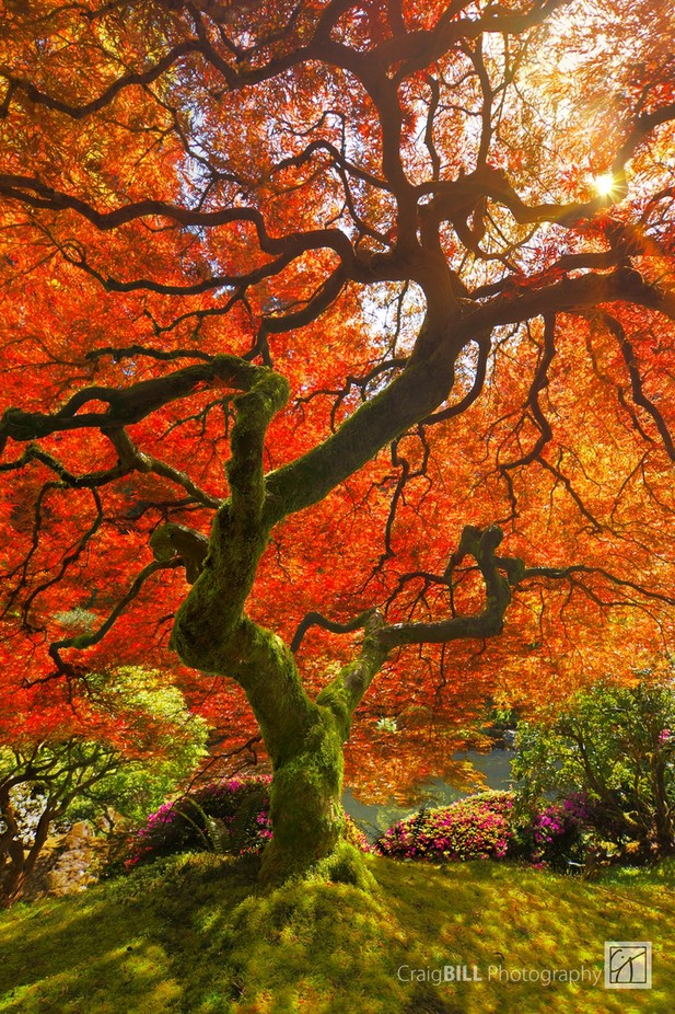 Wishing Tree by CraigBill - Fall 2017 Photo Contest