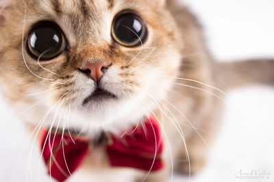 50+ Outstanding Photos Of Cats Being Cats