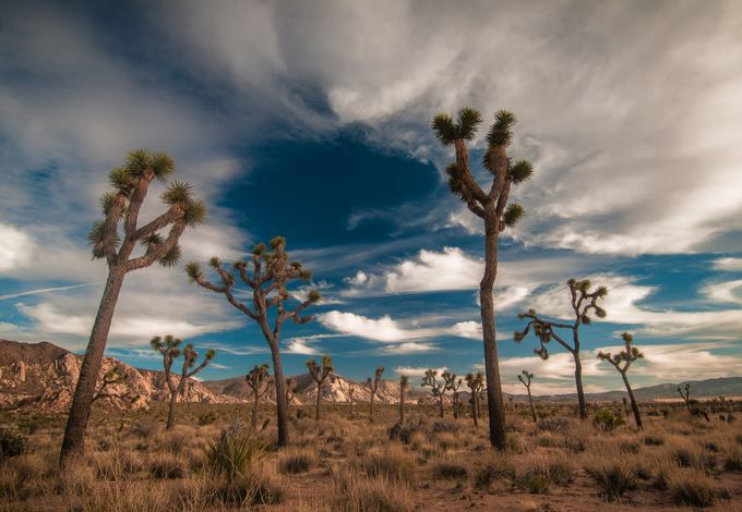 Joshua tree by larryrogers - National Parks Photo Contest