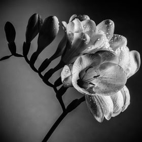 Amazing flower in B&W composition