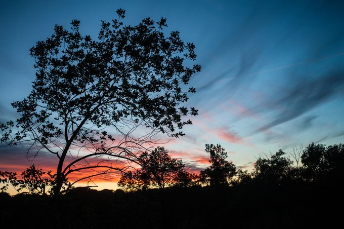 Sunset over the Humber River by Laska - Silhouettes Of Trees Photo Contest