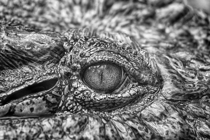 Black and White Eye by philowen - Textures In Black And White Photo Contest